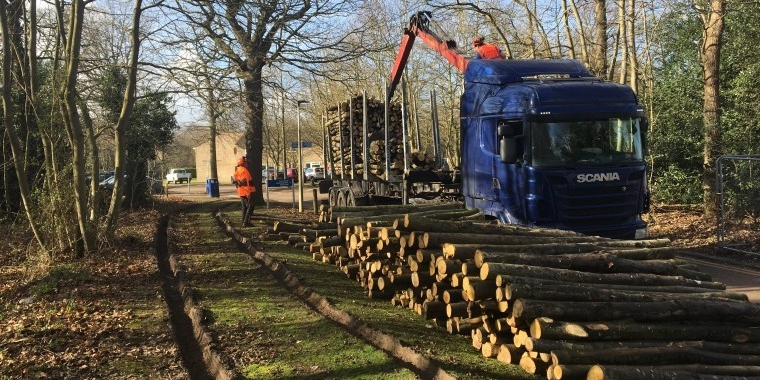 University of Kent signs deal to turn coppiced trees into biofuel
